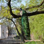 5lazienki-royal-park